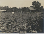 Thompson Lumber Company Employees Surrounded by Crops