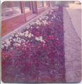 Central Europe Sidewalk with Flowers