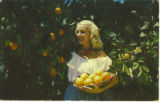 Woman Holding Oranges Postcard